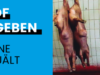 © Bild: Deutsches Tierschutzbüro e.V. - Schachthof Neuruppin