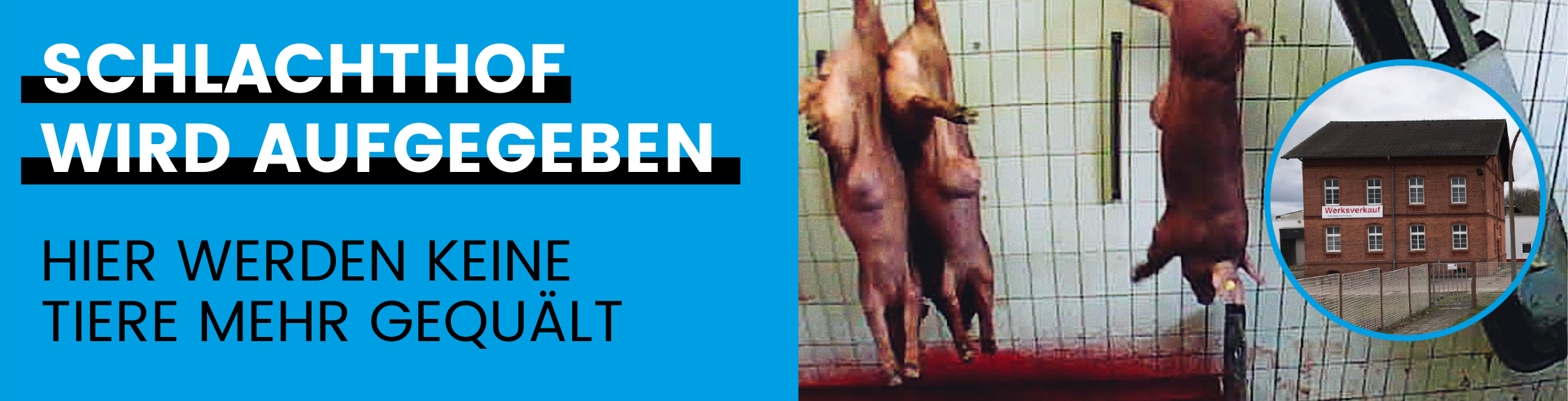 © Bild: Deutsches Tierschutzbüro e.V. – Schachthof Neuruppin