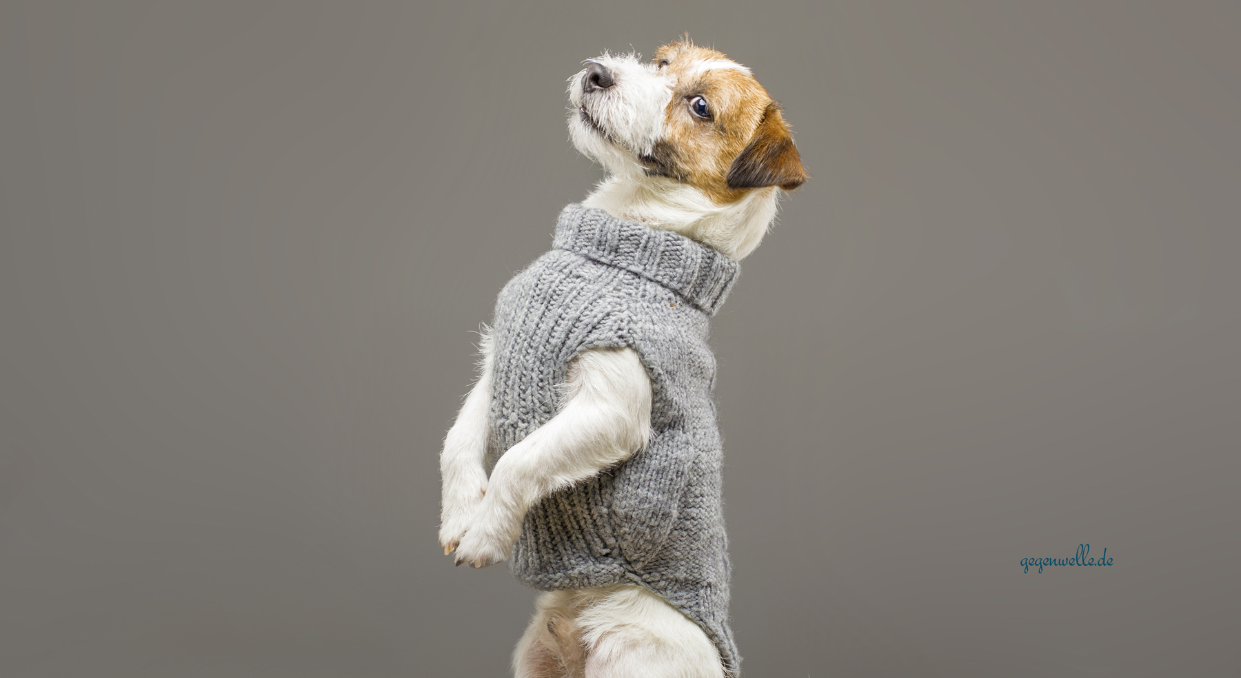 Hundemode