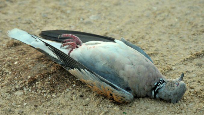 Pauschalreisen für Tiermord