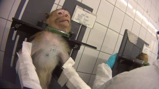 Tierversuche in Hamburgs LPT