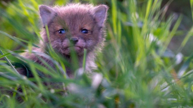 Wildtierschutz in Deutschland