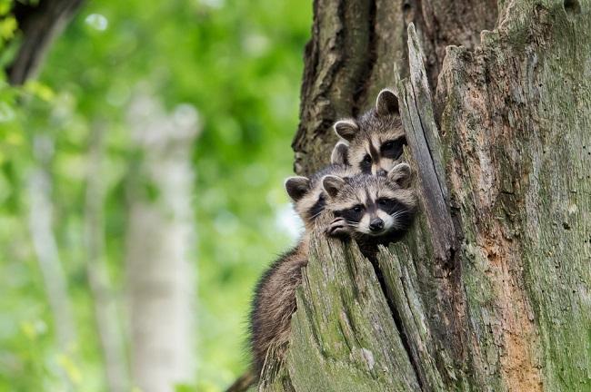 Bayern: keine Achtung vor der Kreatur