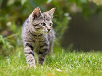 Katzen von Jäger getötet