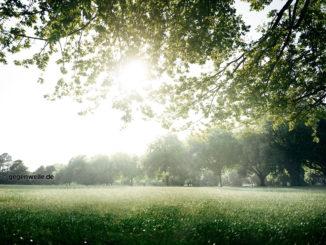 5 Tipps für den heimischen Wald